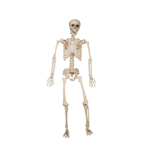 Esqueleto 120 Cm
