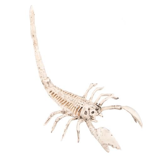 Esqueleto Escorpión